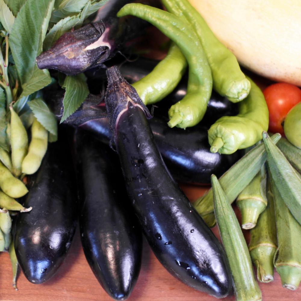 夏野菜 茄子、枝豆、オクラ、甘長唐辛子、トマト